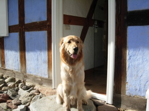 Hund, Urlaub