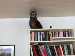 Katzentreppe, Katze, Catwalk, selbst, bauen, einfach, günstig, Billy, IKEA, Regal