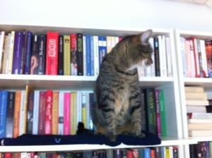 Katzentreppe, Katze, Catwalk, selbst, bauen, preiswert, einfach, Billy, Regal, IKEA