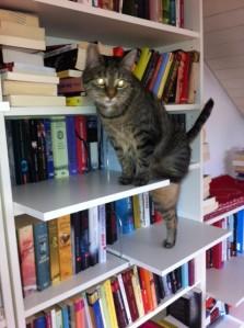 Katzentreppe, dritte, Ebene, Catwalk, Biily, Regal, IKEA