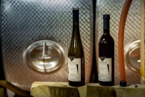 Wein, Weingut, Remstal, Winzer, Ausbildung, Weinbau, Rebe, Oktober, Weinberg, Baden-Württemberg, Stuttgart
